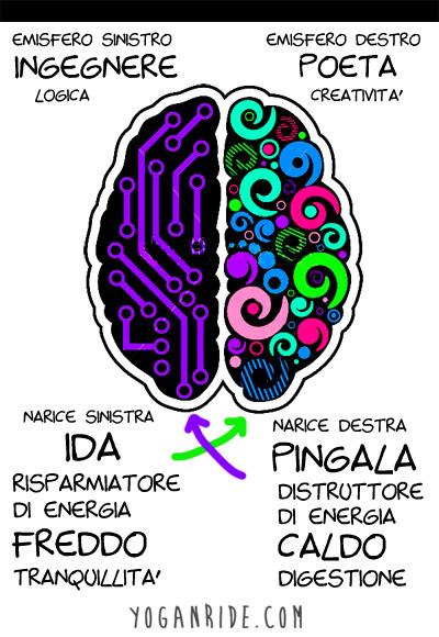 emisfero-destro-sinistro